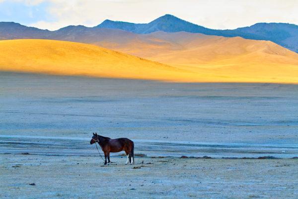 Pvk Photo | Montagne dorée et cheval en Mongolie